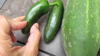 Veggie Picking starting