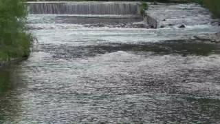 Entspannungsgeräusche – Wassergeräusche mit Vogelstimme – Relaxing sounds – Water sounds of nature