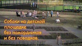 CCTV Собаки без намордников и поводков на детской площадке
