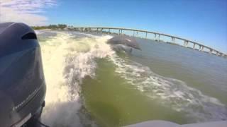 GoPro Dolphin Adventures