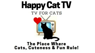 Happy Cat TV for Cats - Cats, Cuteness & Fun Rule!
