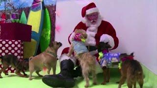 Anche gli amici a quattro zampe festeggiano il Natale