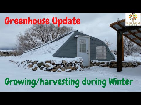 Winter growing & harvesting in the Greenhouse