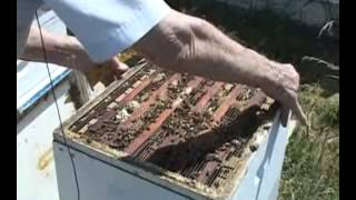 Caring For Bees