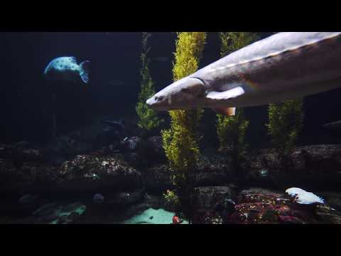 Deep Ocean Aquarium - 4K Version NEW 2017 Virtual Aquarium Video 2160p