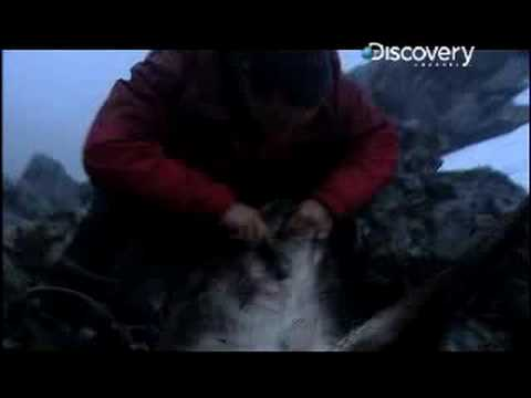 Man vs. Wild - Scotland Skinning Deer
