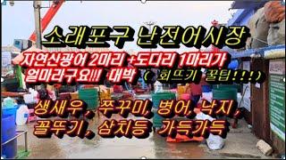 소래포구난전어시장 풍경( 생새우가격, 쭈꾸미, 낙지, …
