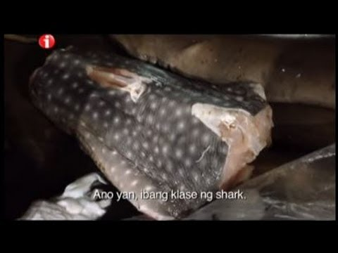 Kara David spots illegal whale shark meat in Cebu   I-Witness