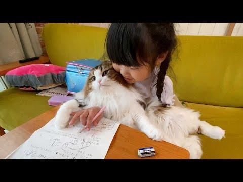 娘が猫と宿題しようとしたら、たし舐められた(最後まで見てね)