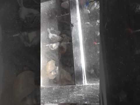 Python eats rabbit -Central Zoo,Nepal