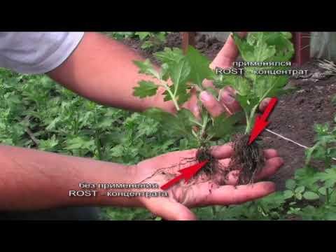 видео: Rost® концентрат Секреты применения Серия 2