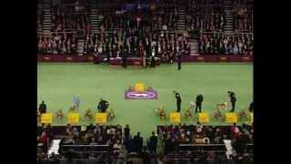 Westminster Best In Show 2004