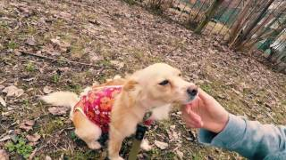 Муха - идеальная собака