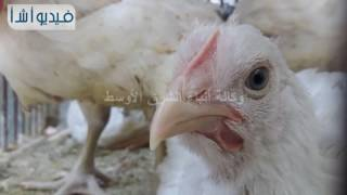 شاهد بالفيديو:  اسعار الطيور قبل رمضان