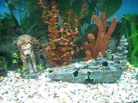 350 litre aquarium with sand fountain youtube for Aquarium 350 litres