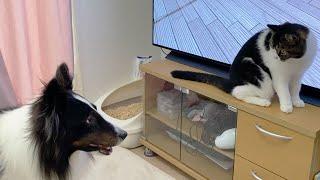 🐈親子猫の家に初めて犬のお友達がやってきた!