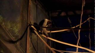 コモンウーリーモンキー よこはま夜の動物園2010-ナイトズーラシア2010 ...