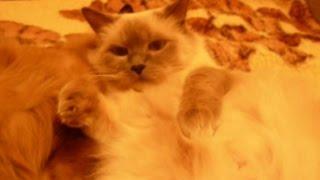 Самые смешные кошки в мире – Очень смешное видео – Мир кошек смешное видео