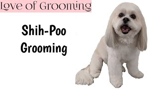 How to Groom a ShihPoo with Comb Attachments and a Scissor Finish