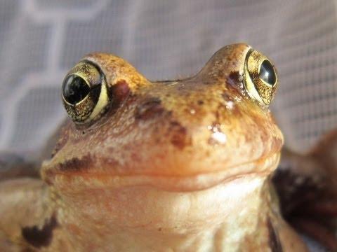 Как избавиться от лягушек в доме? - Домашние хитрости