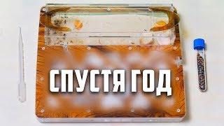 Муравьиная Ферма СПУСТЯ ГОД