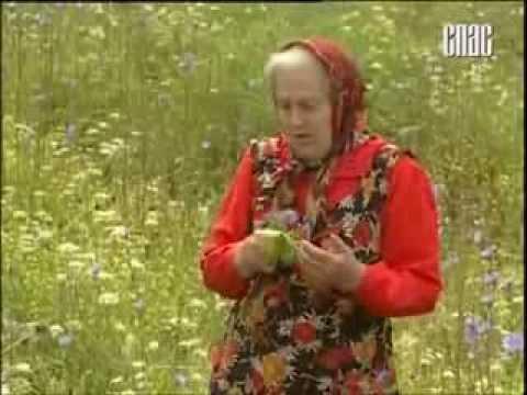 Пряные травы для вашего сада. Список, названия с фото