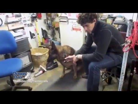 doggy-dans-online-dog-trainer-|-doggy-dans-online-dog-trainer-revealed