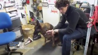 Doggy Dans Online Dog Trainer | Doggy Dans Online Dog Trainer Revealed
