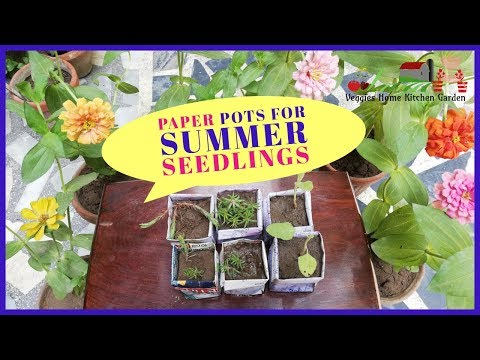 Paper Pots Quick and Easy for Summer Seedlings    Veggies Home Kitchen Garden