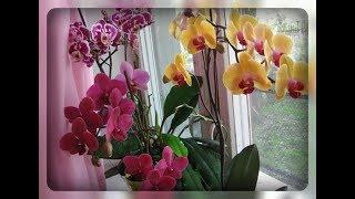 Орхидея! Как заставить цвести это прекрасное чудо ??!