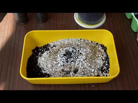 Грунт для кактусов и суккулентов. Как сделать самим?