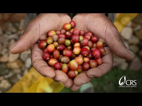 Fair Trade brings new perks to coffee's homeland