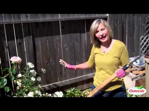 How To Choose Rose Varieties For Your Landscape