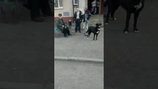 Собака без намордника, как с этим бороться?