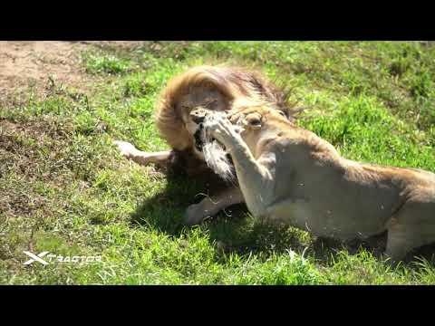 Il Kruger National Park