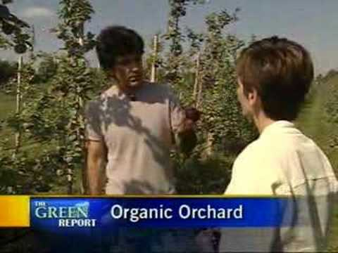 Maniadakis Organic Apple Orchard