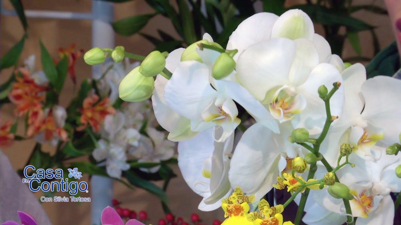 Plantas de Interior cuidados y consejos para Anturio Spatifilium y