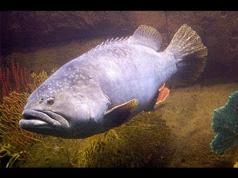 big ocean fish 3 hours youtube