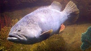 ♥♥ Big Ocean Fish (3 hours)