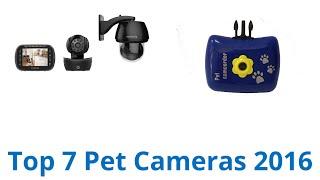 7 Best Pet Cameras 2016