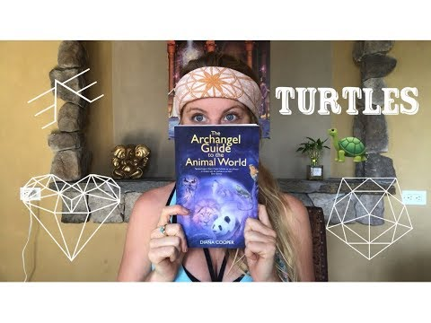 What Is The Turtle Symbol Meaning? (With Video) - All Turtles