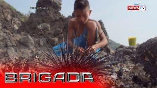 Brigada: Batang maninisid ng sea urchins, todo kayod para sa pamilya