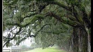 Wadmalaw Island Flyover: Take a Tour, Charleston SC