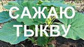 Большой выбор семян овощей, цветов и пряновкусовых. Купить семена с доставкой по украине и киеву. Лучшие семена торговой марки элитсортсемена.
