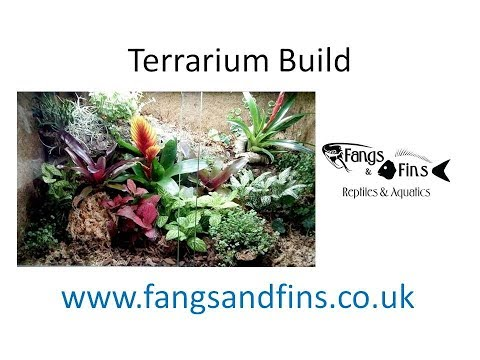 Live Plant Terrarium, Step By Step With Costs.