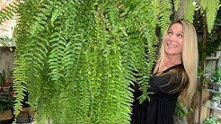 Fern Care 101 | 14 Species That Can Thrive for You!
