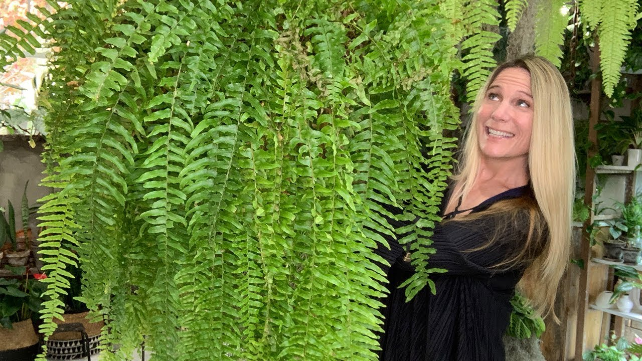 Fern Care 101 14 Species That Can Thrive For You Youtube