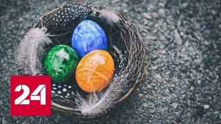 Саратовский фермер выращивает кур, которые несут разноцветные яйца - Россия 24