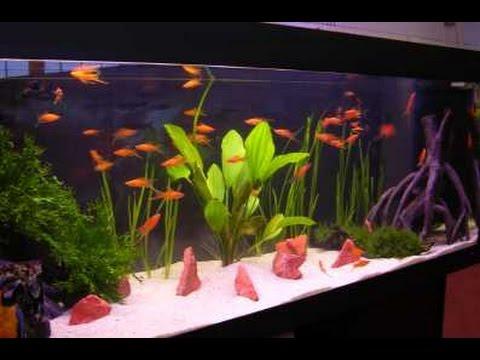 remplir un aquarium de poisson 2017 hd youtube