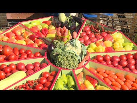 Волгоградские овощеводы представили свои достижения на Дне поля
